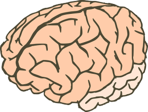 The Self Starving Brain >> Malnourishment And The Brain Anorexia And Neurobiology Research