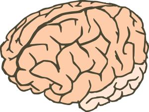 brain-155188_640