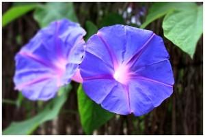 flower-401375_640