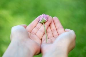 flower-8539_640