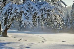 winter-530907_640