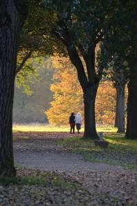 autumn-201411_640