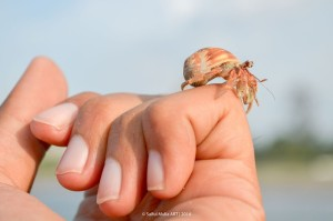 hermit-crab-363593_640