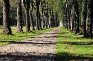 trees-451089_640