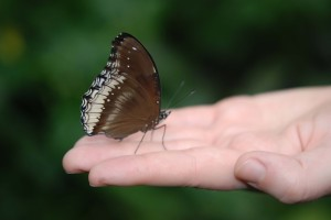 Butterfly in open palm of hand