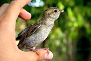 bird-692162_640
