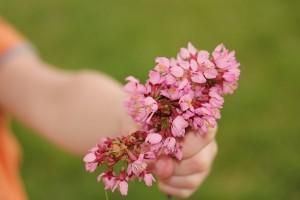 flower-667951_640