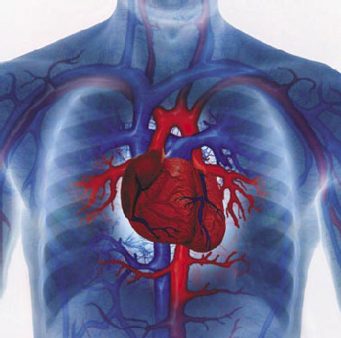 Anorexia can cause heart problems