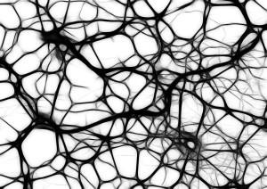 neurons-440660_1280