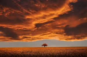 Tree under orange clouds in sunset