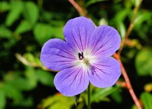flower-397975_640