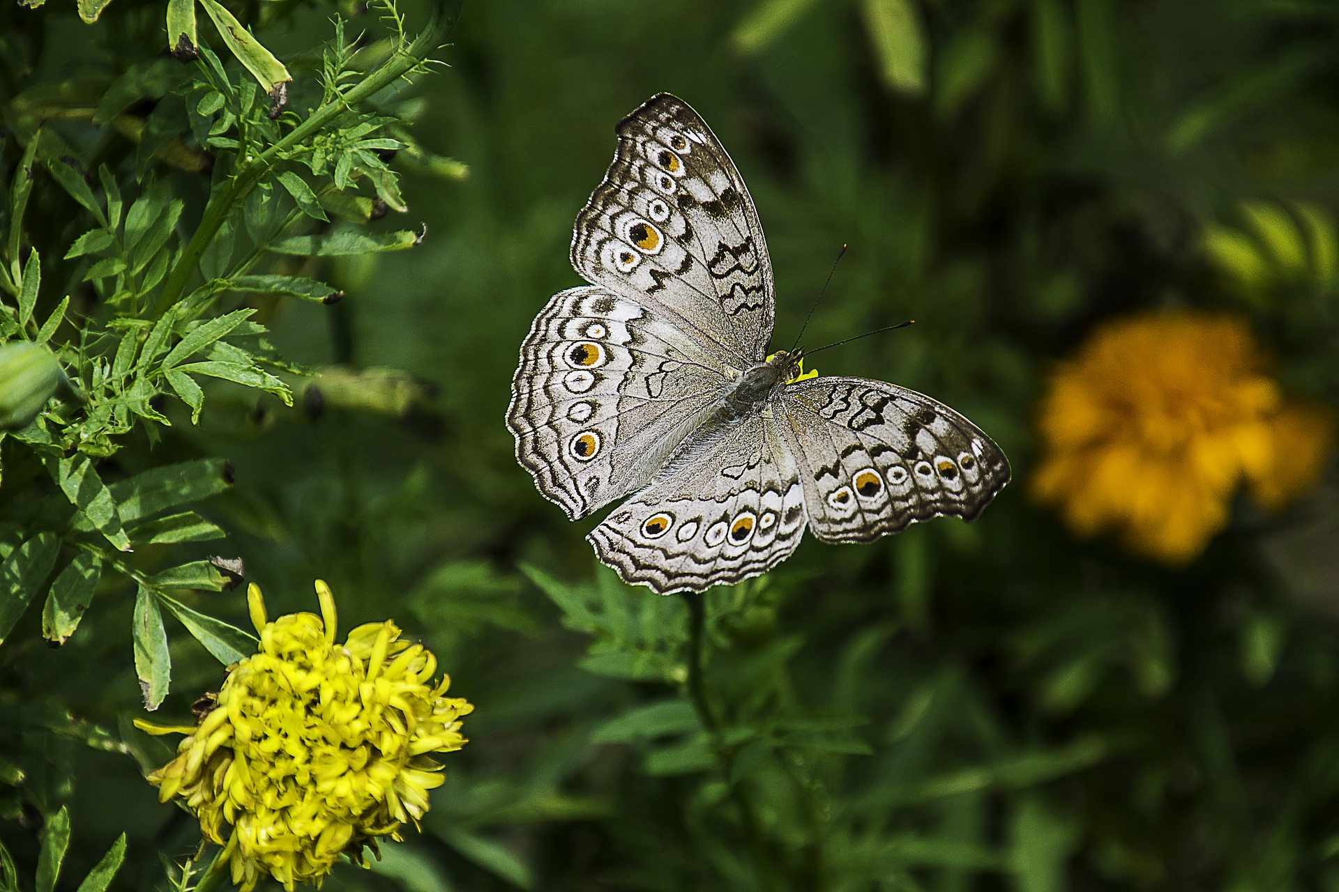 Butterflys and emotional connection