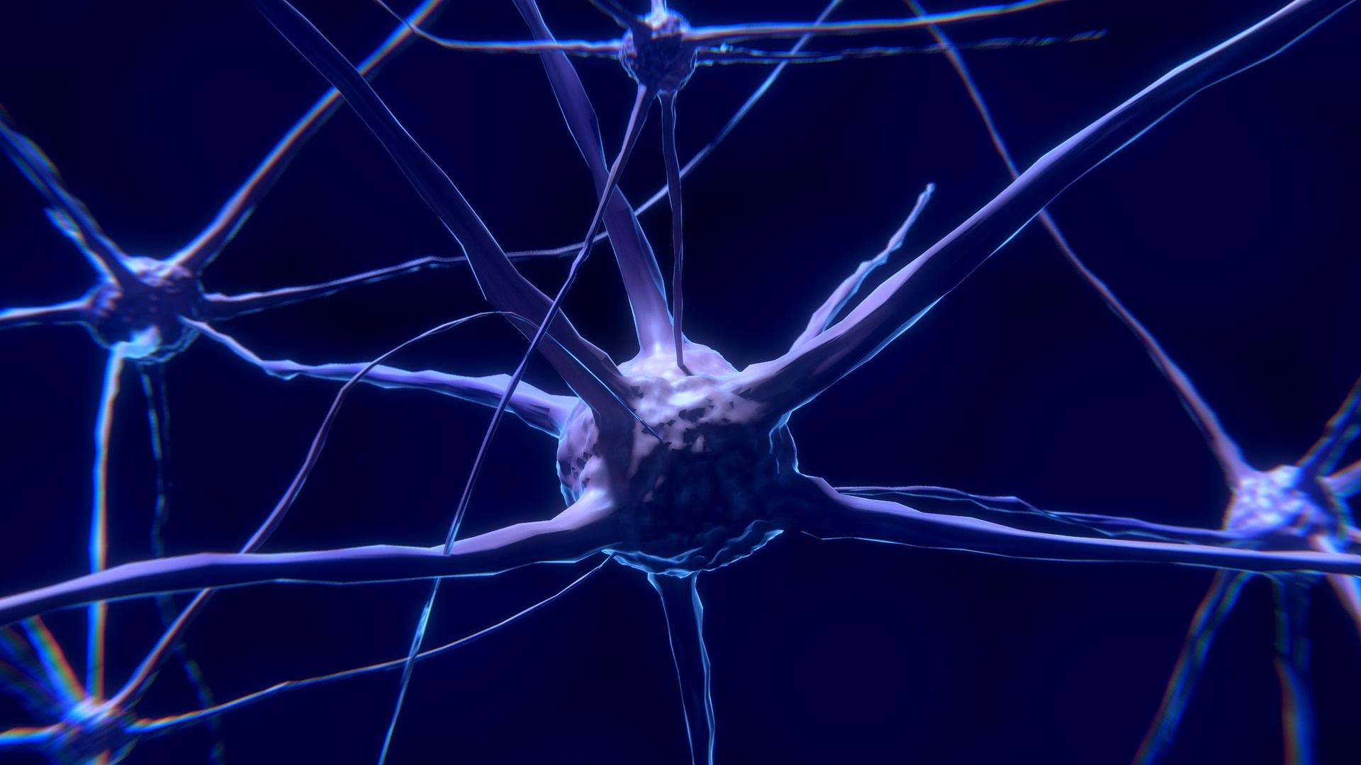 Brain Nerve Cell
