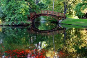 a river with a bridge in tranquil setting for CBT treatment of Binge Eating Disorder