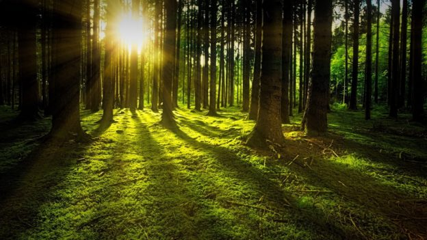 Nature Forest with Sunlight and Moss on Ground