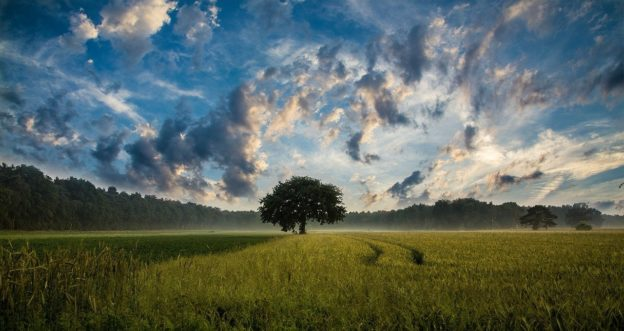 Nature Lone Tree in Field