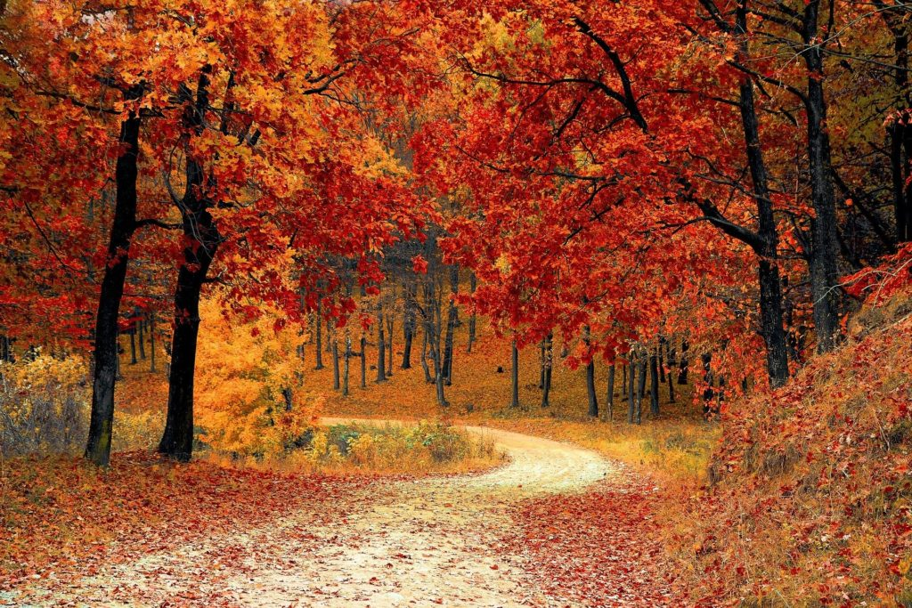 Nature Path Through Trees in Fall Colors