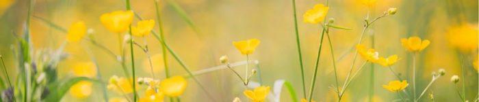 Flowers in Fields