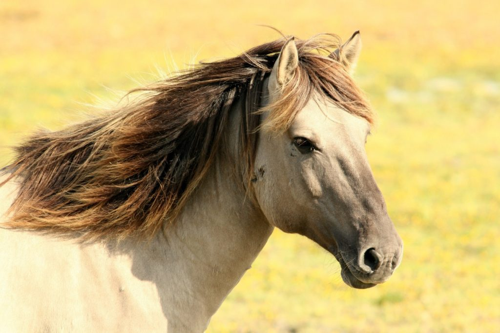 Palomino Horse used in Equine Therapy