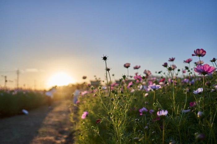 Flowers and Sunrise
