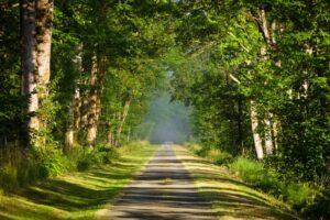 walkway into trees