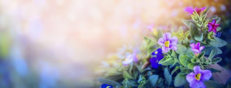 Flower Fields in Purple