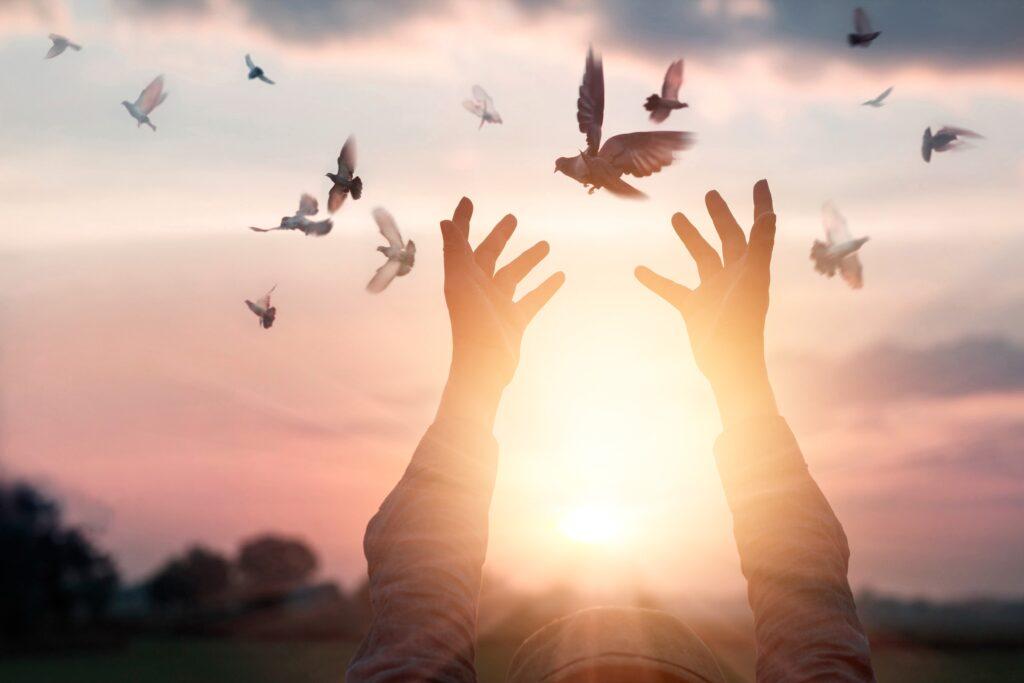 Birds being Released