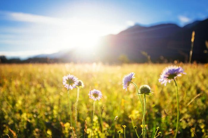 Peaceful view of flower field